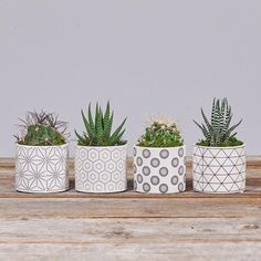 Beautiful Mini Plants In Pots You Must Have 39 Mini Plants, Potted Plants, Indoor Plants, Plant Delivery, Flower Delivery, House Plants Decor, Plant Decor, Cactus Flower, Flower Pots