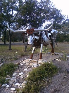 Longhorn - on the way to Fredericksburg in Johnson City
