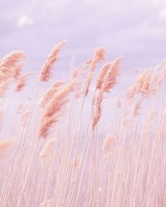 Dreamy Pastel Beach Grass is part of Trendy wallpaper Pink Poppy Photography is all about sharing love, peace and happiness through free creative commons licensed imagery Please help by spreading - Pastell Wallpaper, Pastel Pink Wallpaper Iphone, Peach Wallpaper, Poppy Photography, Nature Photography, Aesthetic Photography Pastel, Photography Flowers, Morning Photography, Phone Wallpapers