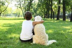 Dog Supplements For Immune System