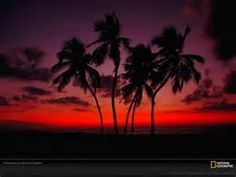 Pal Palm Trees The Free Sunset Wallpaper