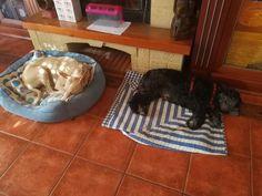 Ratos en casa con Avanti, Bubu, Thais y Odin 06/17