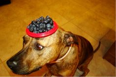 amazing website... food on dogs