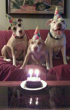 Pittie Party. ;)