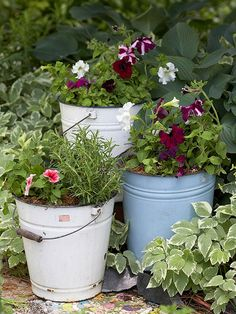 Buckets of Bloom - Use old galvanized pails, buckets, etc.