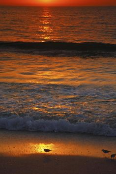 ✯ Captiva Island Sunset - Florida