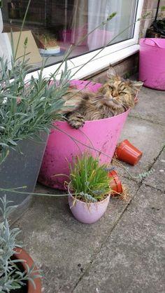 An unusual plant...