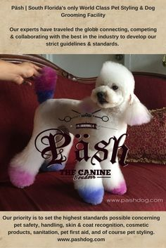 Pet Styling by Päsh The Canine Boudoir www.pashdog.com