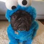 Is your dog a cookie monster?