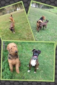 Dog boarding kennels lilydale. Jerome and Roy