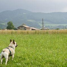 Urlaub mit Hund im Pielachtal im Hotel Steinschalerhof, NÖ   Hundereise Regional, Dogs, Animals, Hiking, Stones, Pet Dogs, Viajes, Animales, Animaux