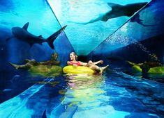 lazy river with sharks surrounding you! I'd do it.