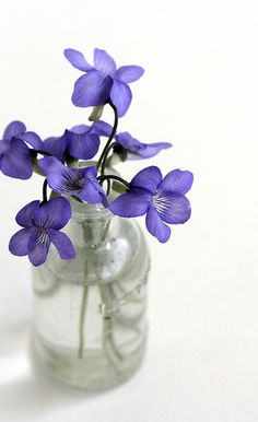 1. (noun) violet any plant or flower of the genus Viola, of many species. The violets are generally low, herbaceous plants, and the flowers of many of the species are blue, while others are white or yellow, or of several colors, as the pansy (Viola tricolor)