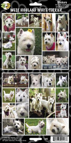 West Highland Terrier Stickers