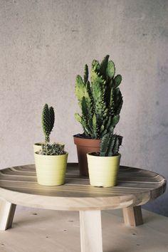 Dit tafeltje met vier potten erop, is gemaakt van massief eikenhout. Massief houdt in dat het helemaal van hetzelfde materiaal gemaakt is.