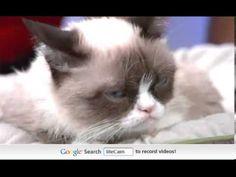 ▶ TV Anchor Fails at Trying to Make Grumpy Cat Smile - Hilarious! - YouTube October 2013 #GrumpyCat