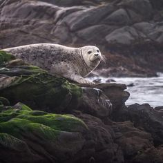 @ Bean Hollow State Beach This is a harbor seal. by khenny