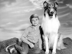 TV Dogs: LASSIE ON LASSIE Where else to start? Lassie remains the ultimate story of a boy and his dog. Over 19 seasons from 1954 to 1974 the drama went through 6 different collie stars Rough Collie, Collie Dog, Collie Puppies, Sean Leonard, Dog Sounds, Famous Dogs, Famous People, Vintage Television, Old Shows