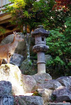 A deer on Miyajima (Hiroshima).