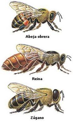 ilustraciones de abejas - Buscar con Google