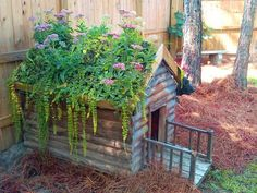 An old dog house planter. This is like little house on the prairie living roof dog house style! My fave so far. Landscaping Austin, Landscape Timbers, Cool Dog Houses, Outside Dog Houses, Living Roofs, Dog Rooms, Types Of Dogs, Old Dogs, Animal House