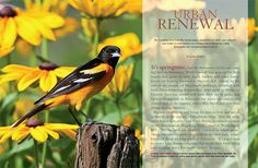 By helping birds, residents of cities and suburbs can contribute to conserving biodiversity.