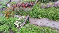 Trapsgewijze beplanting (stadion), Parc andré citroën