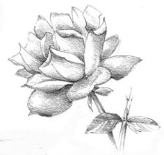 Drawings of Flowers for Beginners: When Drawing Flowers Becomes a Breeze
