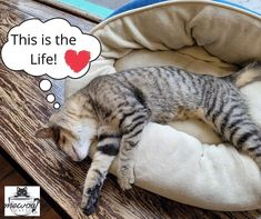 As long as you're happy baby! Anyone have kitties that like to hang over something when they're sleeping? #mewow #catcafe #doylestownkitties #cat #cats #catsandcoffee #mewowcatcafe #lovecats #lifewithcats #catsarethebest #catsareawesome #adoptacat #catadoption #adoptdontshop #rescuecatsofinstagram #catpicoftheday Instagram News, Cats Of Instagram, Cat Cafe, Happy Baby, Adoption, Sleep, Kitty, Animals, Foster Care Adoption