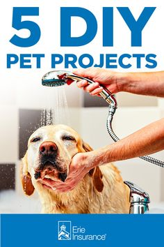 Have you ever considered adding a pet washing station to your house? Or giving your pet their own little space? We've got these and other ideas for you to DIY in your home and help make it more pet-friendly. Animal Projects, Diy Projects, Pet Washing Station, Erie Insurance, Making Life Easier, Diy Stuffed Animals, Pet Care, Your Pet, Space