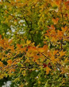 Delicate tones, softness of colors, sweet fragrances, melancholic transition season: I love autumn more than anything, and spending this week-end au Moulin was so worth it. (à Parc naturel régional des Causses du Quercy)