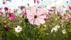 Als de herfst nadert, is het snel gedaan met de bloemen in je tuin. Bloemen bloeien natuurlijk in het voorjaar en in de zomer, dus als het einde van augustus nadert zullen de prachtige rode, blauwe en paarse tinten snel vervangen worden door de kleuren van de herfst. Althans, dat denk je misschien. Maar wist