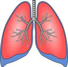 Os alimentos que comemos afetam nossos pulmões e podem at&#233…