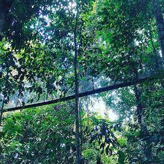 【valkyria_opus】さんのInstagramをピンしています。 《A #Walk #Above, #高空 #步行  #ValkyriaOpus #女武神作品  #Malaysia #Sabah #KotaKinabalu #MtKinabalu #MountainKinabalu #Kinabalu #RainForest #Forest #Ranau #Poring #CanopyWalk #Canopy #马来西亚 #沙巴 #哥打京那巴鲁 #神山 #蘭瑙 #森林 #雨林 #冠层步行 #冠层 #步行#🌲》