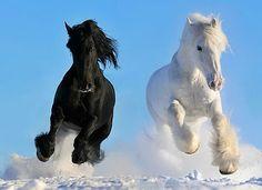 Imagenes de caballos - Fotografias equinas: septiembre 2015