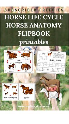 Montessori Baby, Montessori Activities, Preschool Worksheets, Kindergarten Activities, Curriculum, Homeschool, Horse Anatomy, Preschool At Home, Family Crafts