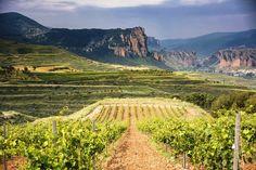 Nuestros viñedos tienen orientación norte.
