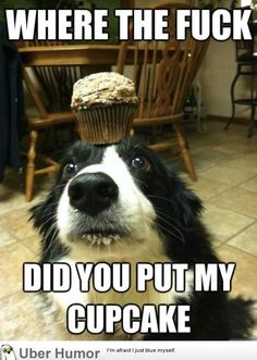 funny pictures with captions | Cute Pictures Animals Funny Captions #16