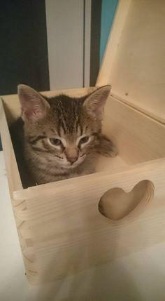 Kotki też lubią drewniane skrzyneczki :)  Cats also like boxes :)