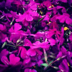 Again flower