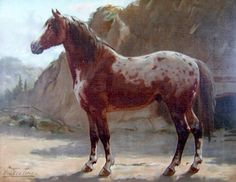LE Spotted Horse dans l'Histoire / Du 18e Siècle au 19e siècle / Part. IV