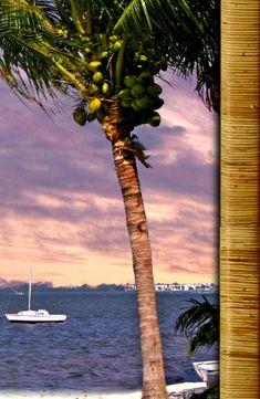 River Palm Cottages Camp - Jensen Beach, Florida