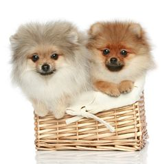 #lovely #dogs