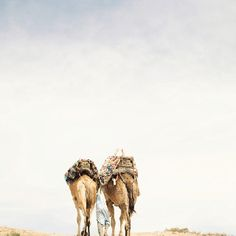 Just outside Marrakech, going somewhere, so slowly...