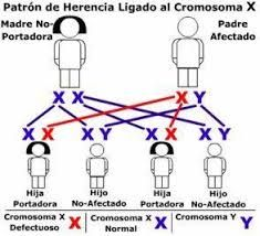 Las Mejores 64 Ideas De Adn Y Los Cromosomas Cromosomas Adn Biología