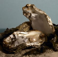 How and Why Oysters Make Pearls