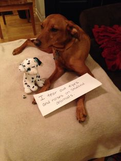 Dog Shaming Pictures Elf On The Shelf