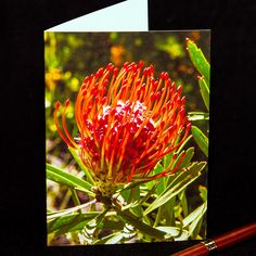 Photo Cards, Photo Greeting Cards, Tropical Flowers, Pin Cushions, Etsy Shop, Orange, Pacific Northwest, Hdr, Maui