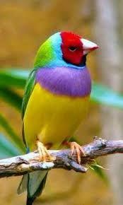 Risultati immagini per birds