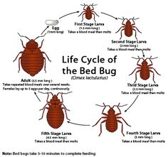 Bed Bug Bites – Signs, Symptoms and Treatment -  http://spiderbites.net/bed-bug-bites/